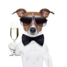 celebration-dog